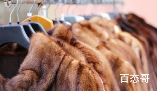 荷兰丹麦扑杀水貂 新冠病毒会通过皮草制品传播吗?