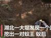 湖北发现超大蚁穴挖出超大蚁后 巢穴已有六十年的历史了